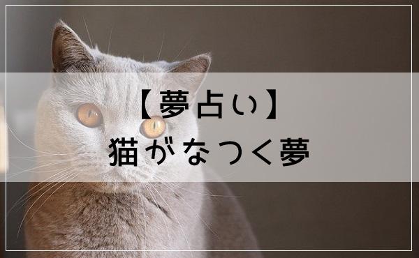 【夢占い】猫がなつく夢