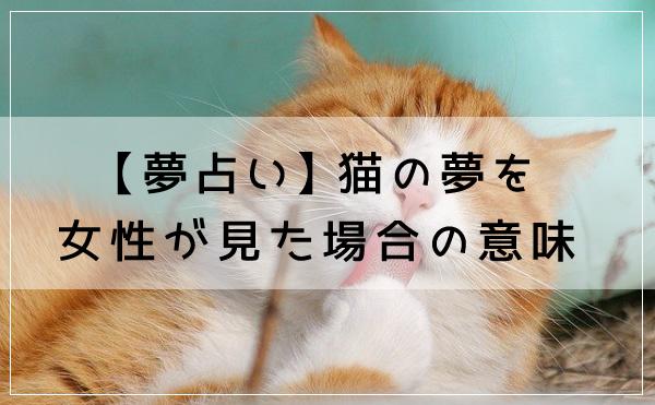 【夢占い】猫の夢を女性が見た場合の意味
