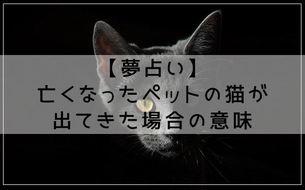 【夢占い】亡くなったペットの猫が出てきた場合の意味