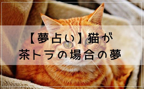 【夢占い】猫が茶トラの場合の夢