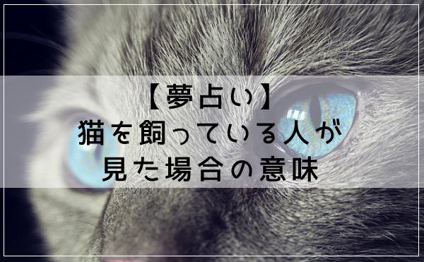 【夢占い】猫を飼っている人が見た場合の意味