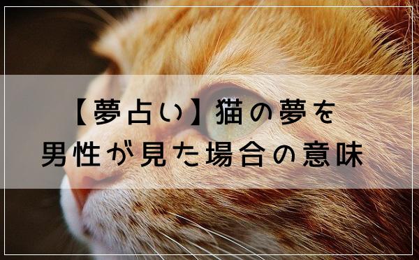 【夢占い】猫の夢を男性が見た場合の意味