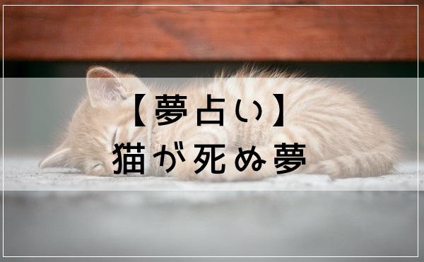 【夢占い】猫が死ぬ夢