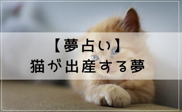 【夢占い】猫が出産する夢