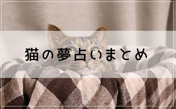 猫の夢占いまとめ