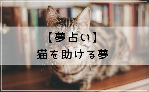 【夢占い】猫を助ける夢
