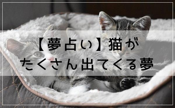 【夢占い】猫がたくさん出てくる夢