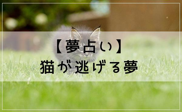 【夢占い】猫が逃げる夢
