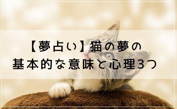 【夢占い】猫の夢の基本的な意味と心理3つ