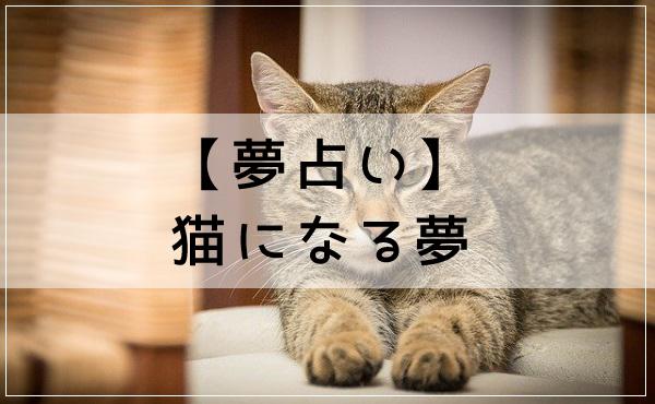 【夢占い】猫になる夢
