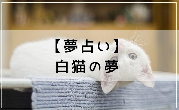 【夢占い】白猫の夢