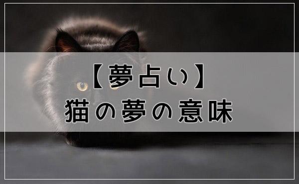 夢占いの定番!猫の夢の意味