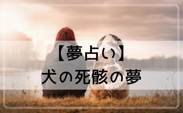【夢占い】犬の死骸の夢