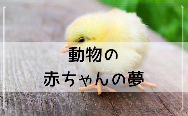 【夢占い】動物の赤ちゃんの夢