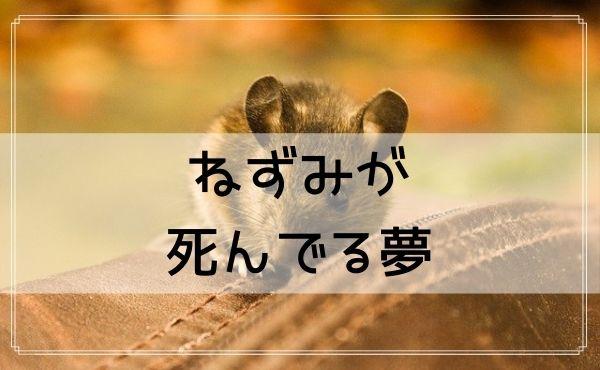 【夢占い】ねずみが死んでる夢