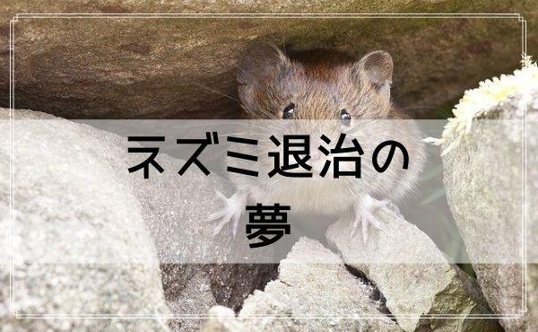 【夢占い】ネズミ退治の夢
