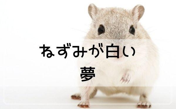 【夢占い】ねずみが白い夢
