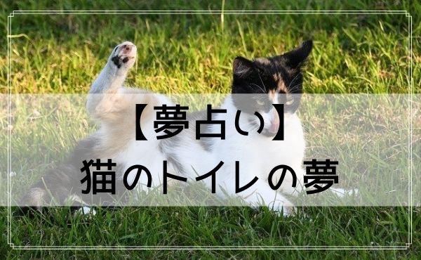 【夢占い】猫のトイレの夢
