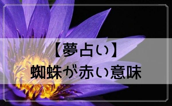【夢占い】蜘蛛が赤い意味