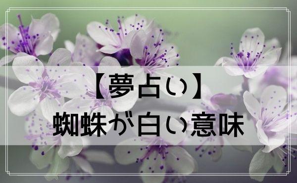 【夢占い】蜘蛛が白い意味
