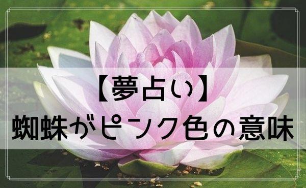 【夢占い】蜘蛛がピンク色の意味