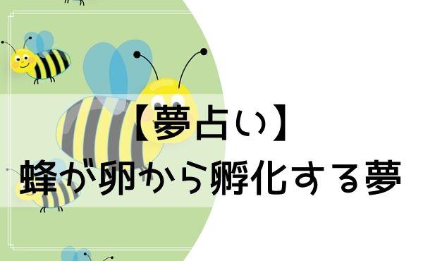 【夢占い】蜂が卵から孵化する夢
