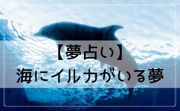 【夢占い】海にイルカがいる夢
